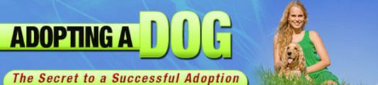 Dog Adopting-Secret To A Successful Adoption