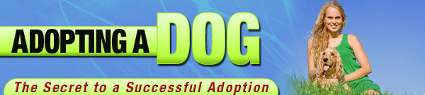 Product picture Dog Adopting-Secret To A Successful Adoption